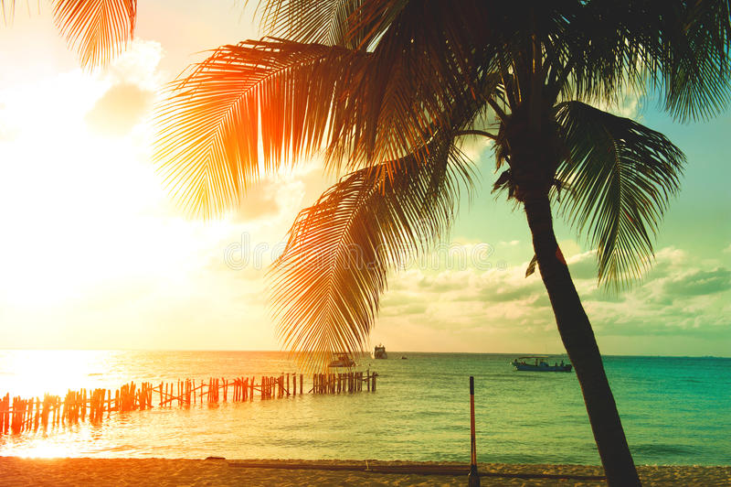 Solnedgångstrand med palmträd och härlig himmel fotografering för bildbyråer