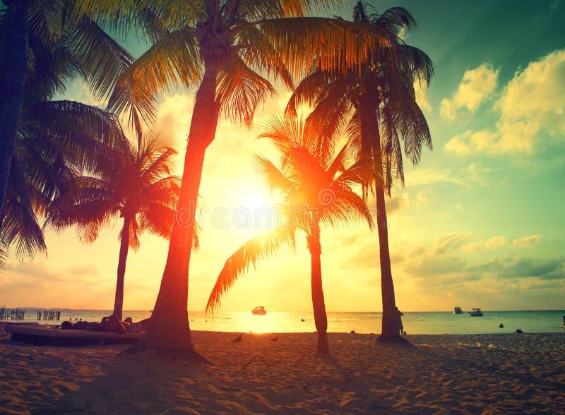 Solnedgångstrand med palmträd och härlig himmel arkivfoto