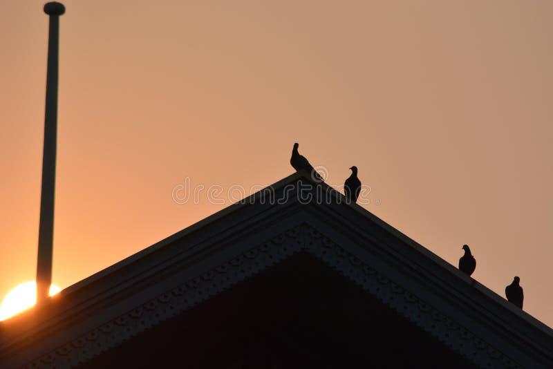 Solnedgångtaket royaltyfria bilder