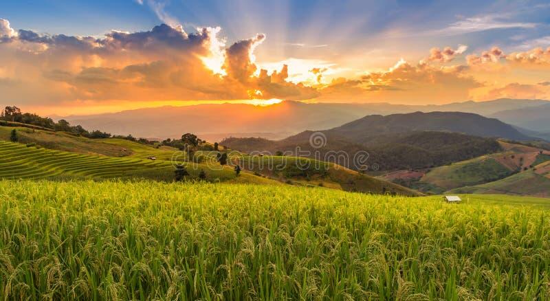 Solnedgångtid på det gröna terrasserade kolonirårisfältet i PA bong Pieng, Mae Chaem, Chiang Mai, Thailand royaltyfri fotografi