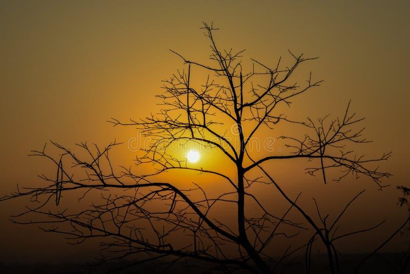 Solnedgångträd arkivfoto