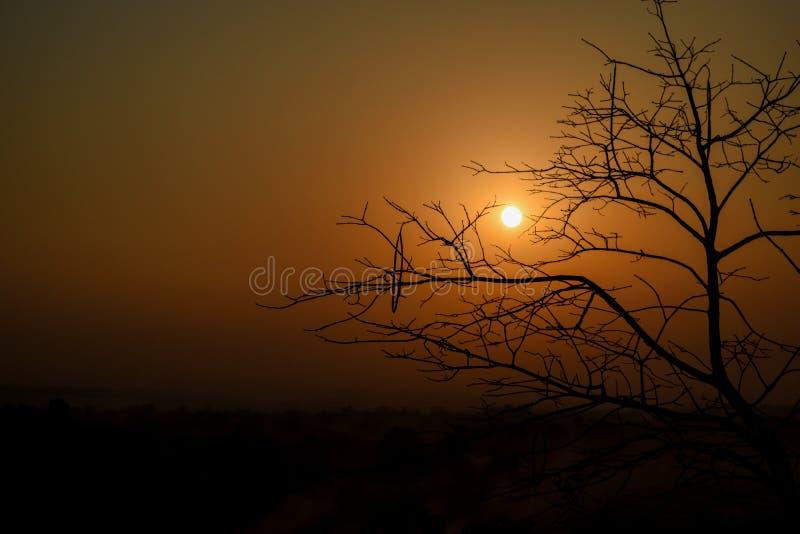 Solnedgångträd royaltyfri bild