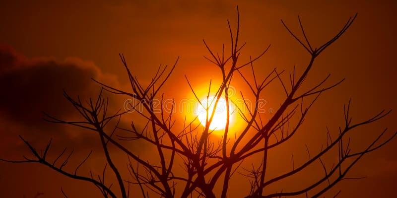 Solnedgångträd royaltyfri foto