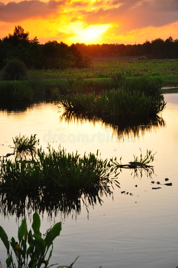 solnedgångvåtmark royaltyfri bild