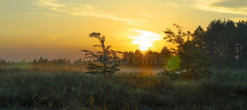 Solnedg?ng i skogen arkivbilder