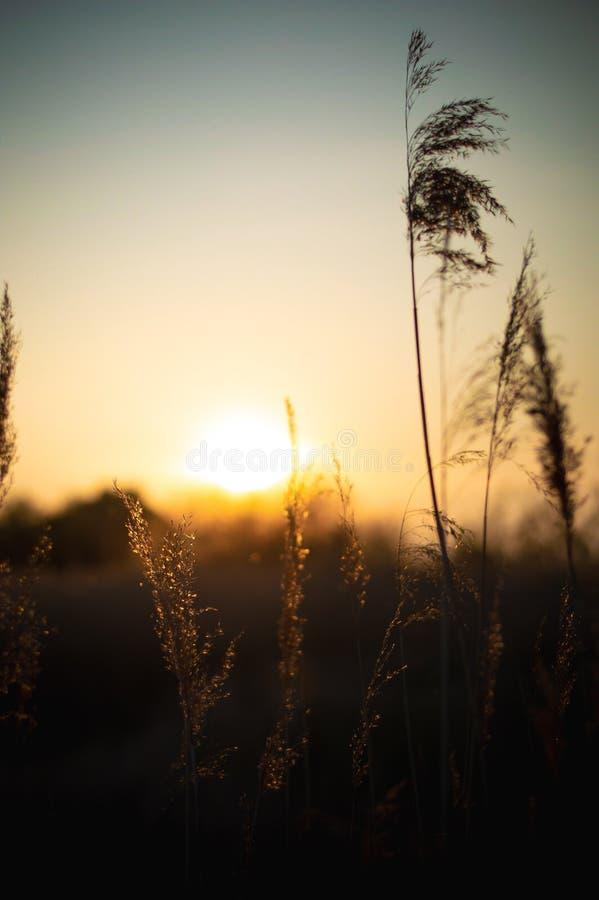Solnedg?nglandskaplandskap arkivbild