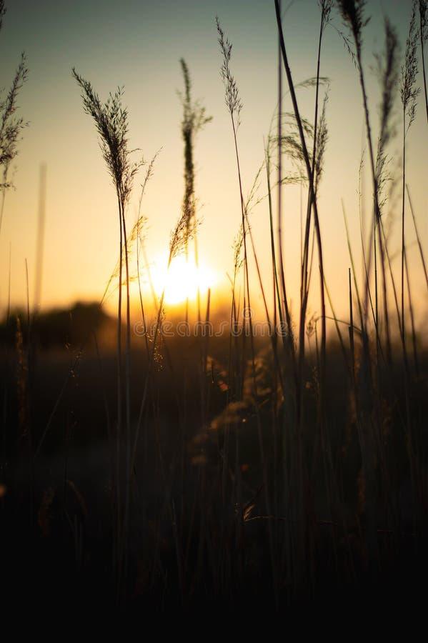 Solnedg?nglandskaplandskap arkivfoton
