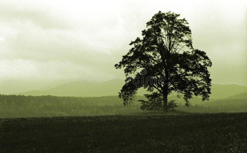 Solo árbol fotos de archivo libres de regalías