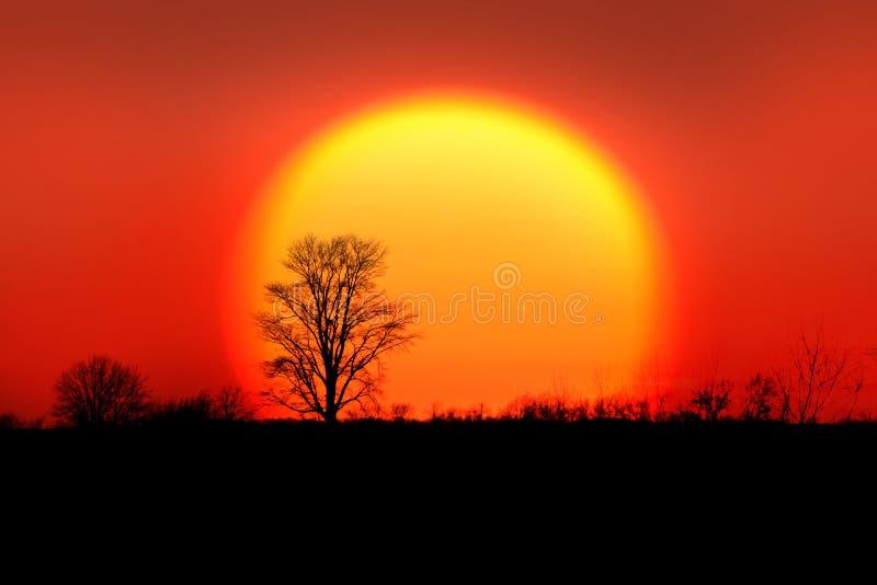 Solo árbol contra del sol de la subida descenso detrás imágenes de archivo libres de regalías