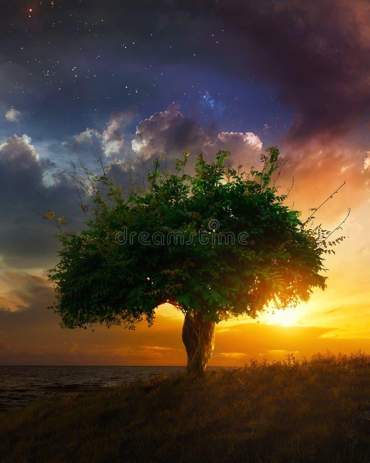 Solo árbol en la puesta del sol fotografía de archivo