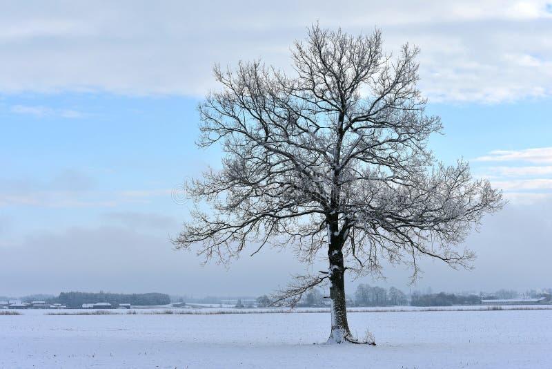 Solo árbol Invierno imagen de archivo