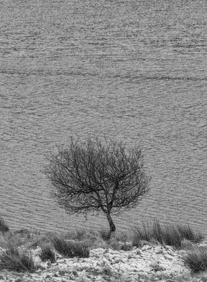 Solo árbol por el borde de un lago en Escocia imágenes de archivo libres de regalías