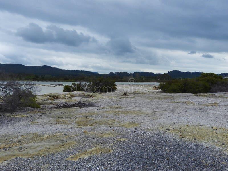 Solo amarelo no lago Rotorua foto de stock royalty free