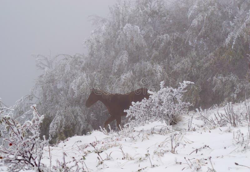 Solo caballo que corre en el bosque fotos de archivo