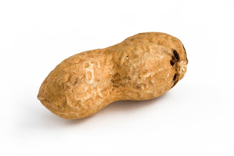Solo cacahuete - aislado imagenes de archivo
