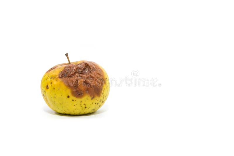Solo cierre putrefacto de la manzana encima del tiro aislado en blanco fotografía de archivo libre de regalías