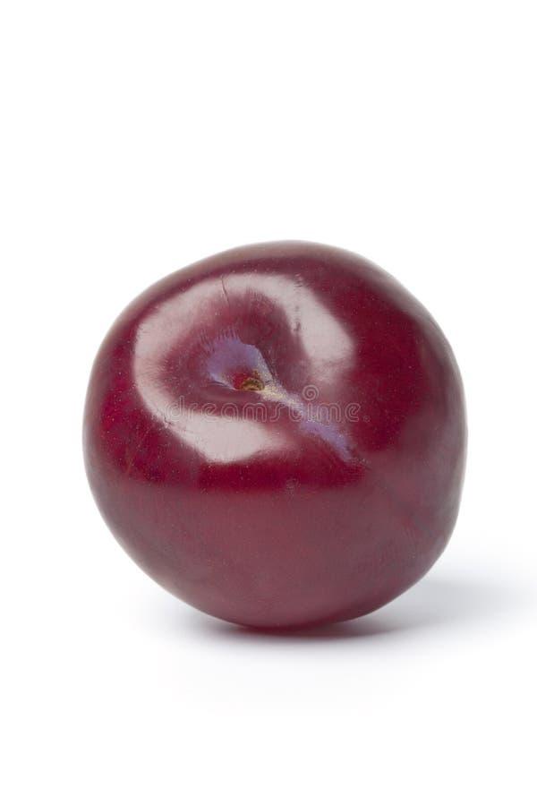 Solo ciruelo púrpura entero fotos de archivo libres de regalías