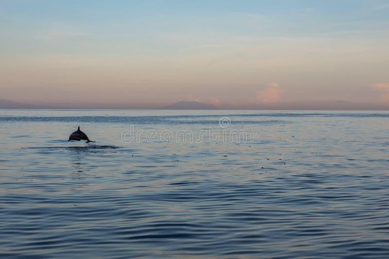 Solo delfín salvaje que salta en el mar con el cielo de la puesta del sol fotos de archivo