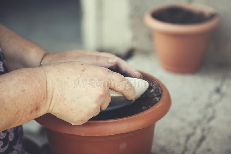 Solo do vaso da mão da mulher imagem de stock royalty free