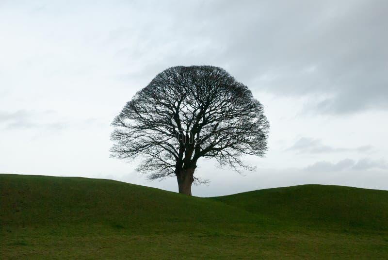 solo drzewo zdjęcie stock