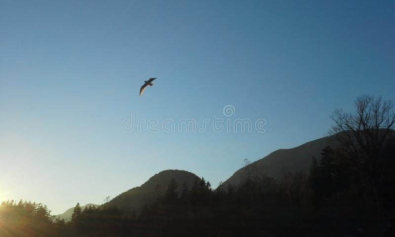 Solo Flight. A seagull soars over the mountains royalty free stock photos
