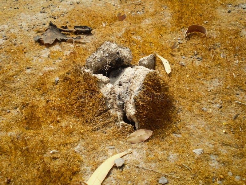Solo inchado devido ao crescimento Fenômenos anormais no solo foto de stock