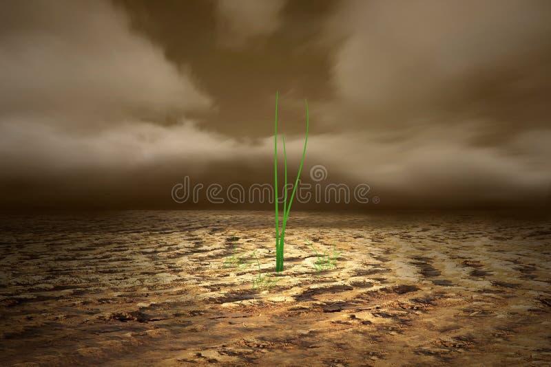 Solo inoperante crescente da calha da planta verde imagens de stock royalty free