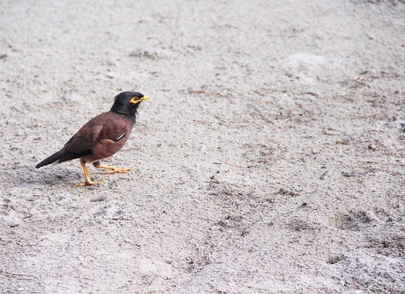 Solo pájaro que camina en la playa imagen de archivo libre de regalías