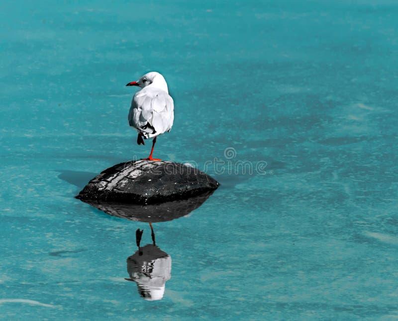 Solo pequeño pájaro blanco de la gaviota que se sienta en el neumático de coche de goma negro viejo en el mar con la reflexión es foto de archivo