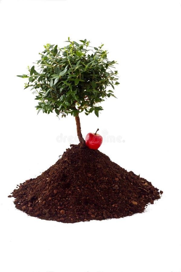 Solo pequeno da árvore foto de stock royalty free