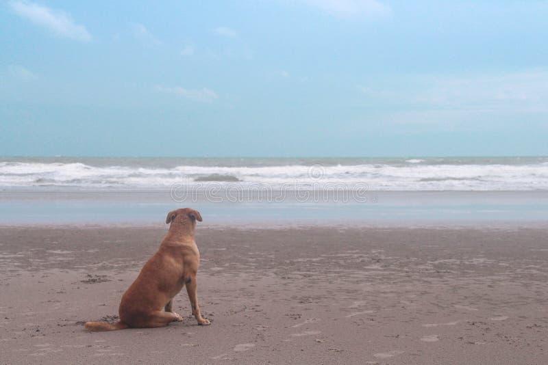 Solo perro marrón que se sienta en la playa arenosa y que mira la opinión del mar con el fondo del cielo azul por la mañana imágenes de archivo libres de regalías