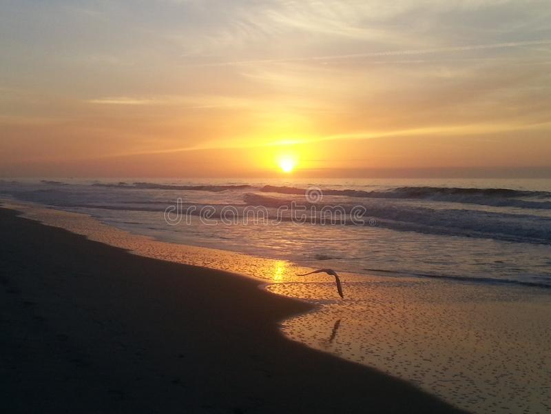 Solo seagullflyg på kusten på soluppgång arkivbild