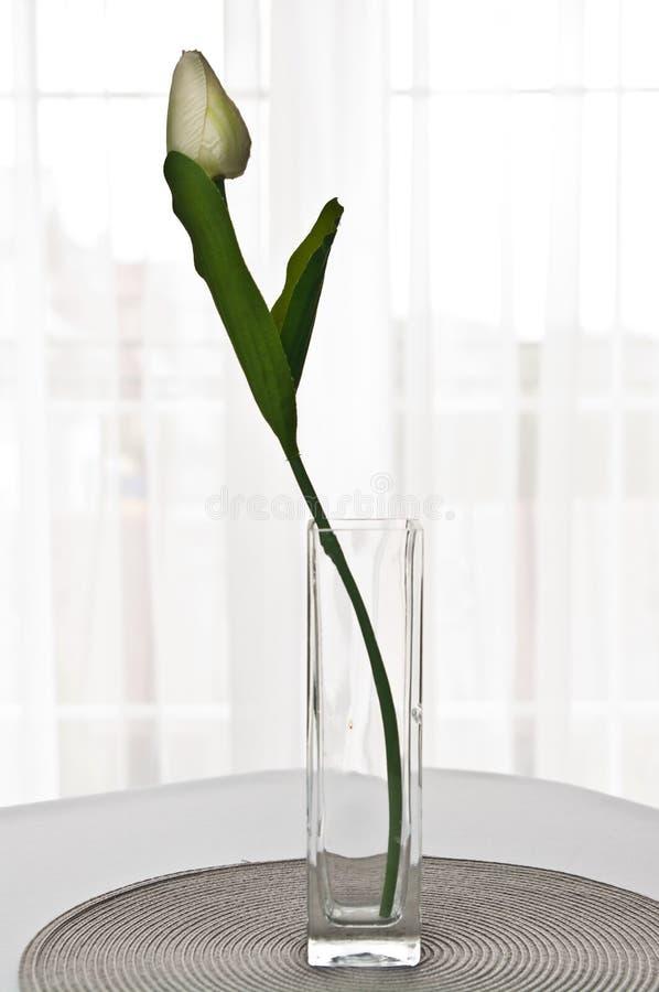 Solo tulipán en un florero de cristal contra una ventana brillante imágenes de archivo libres de regalías