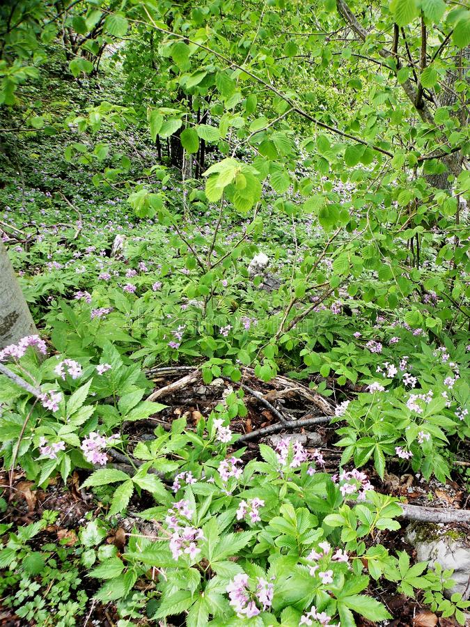 solo verde em flores selvagens da floresta imagem de stock royalty free