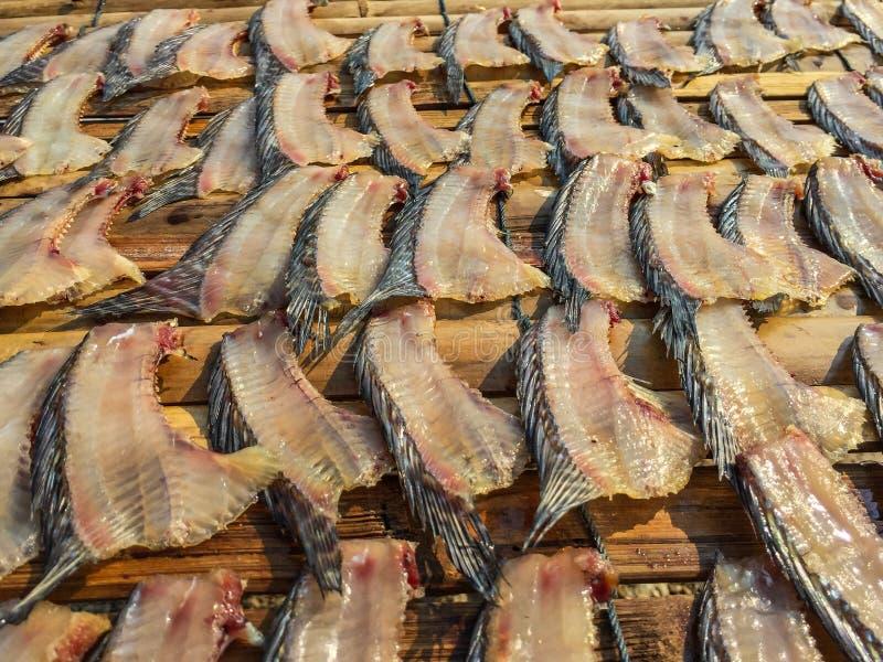 Solony, słońce suszący tilapia ryby dorsalny żebro obraz stock