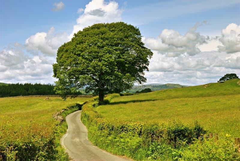 Solos árbol y carril. foto de archivo