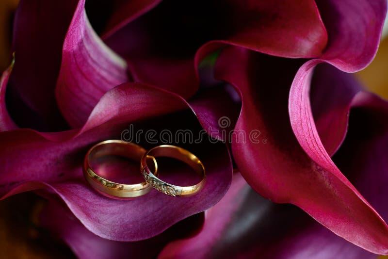 Solotouch dwa pierścionku kłama na płatka Burgundy kalii lelujach zdjęcia stock