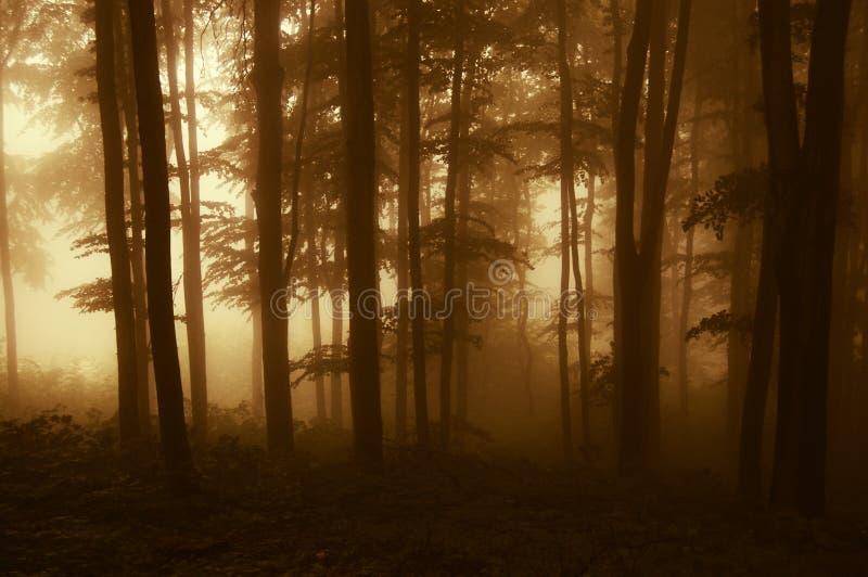 Solresning i en mörk skog med dimma i höst royaltyfri foto