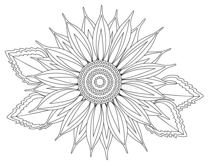 solros vektor illustrationer