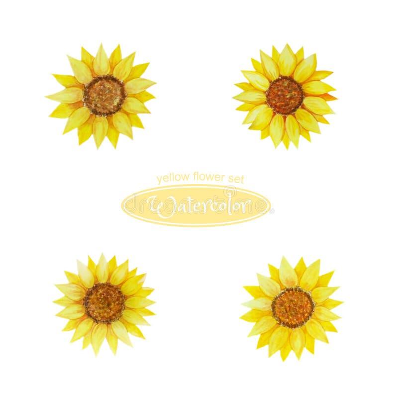 Solros blommahuvud En uppsättning av vattenfärgblommor i guling för designen, sammansättning, hälsningar vektor illustrationer