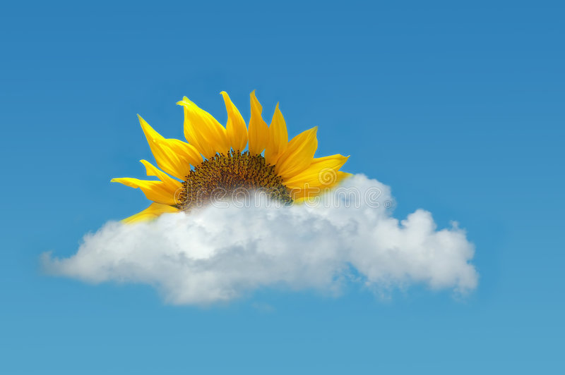 solros för blå sky royaltyfri bild