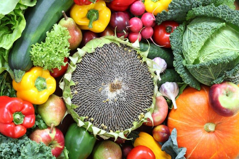 Solros med veggies fotografering för bildbyråer