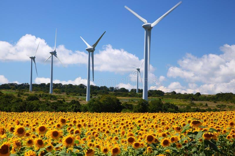 Solrosen sätter in med windmillen royaltyfria bilder