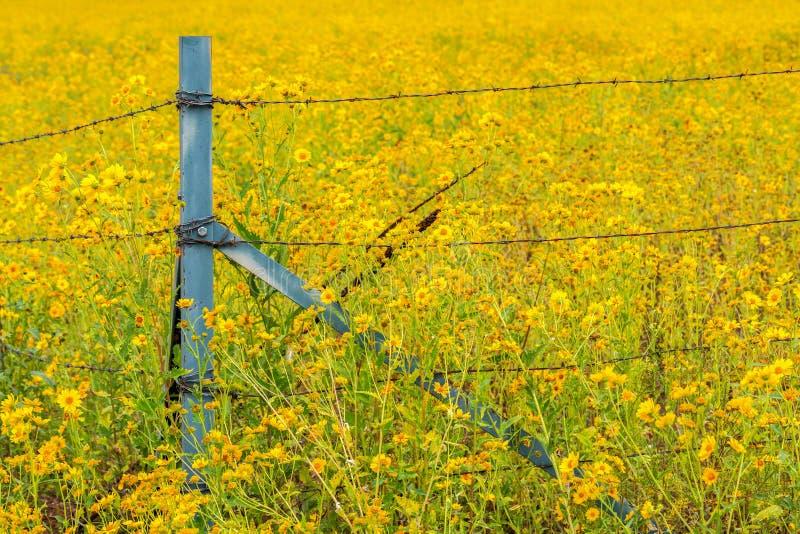Solrosfält med vildblommor som omger Barb Wire Fence arkivbild