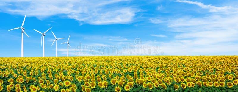 Solrosfält på himmel Sommarlandskaptapet Härlig naturtapetbakgrund Vindturbin i kulle Ekologiconcep royaltyfri fotografi