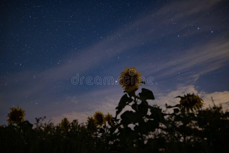 Solrosfält på natten, astrophotography, stjärnor på himmel arkivfoton