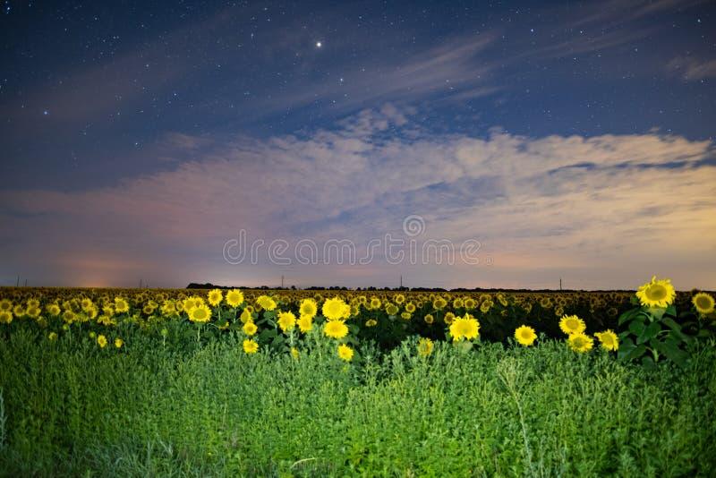 Solrosfält på natten, astrophotography, stjärnor på himmel royaltyfria bilder