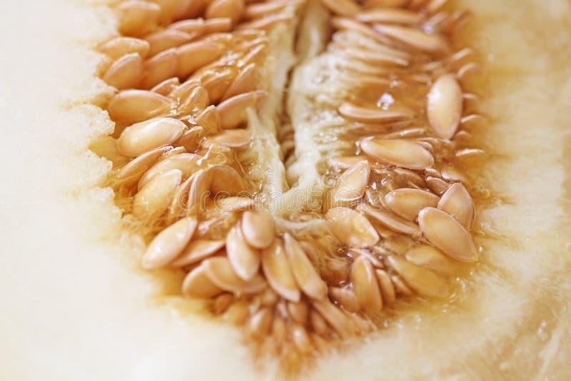 Solrosfrö, melonfrö i snittet Lätt erotism arkivfoton