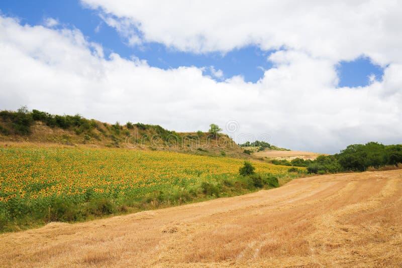 Solroslandskap i baskiskt land arkivbild