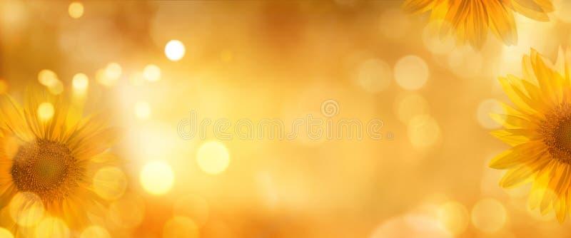 Solrosor i höst royaltyfri bild